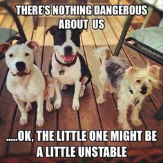 There's nothing dangerous about us  ...OK, the little one might be a bit unstable