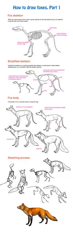 69 ideas how to draw fox sketch Male Figure Drawing, Figure Drawing Reference, Anatomy Reference, Drawing Techniques, Drawing Tips, Fox Anatomy, Animal Anatomy, Fox Sketch, Fox Drawing