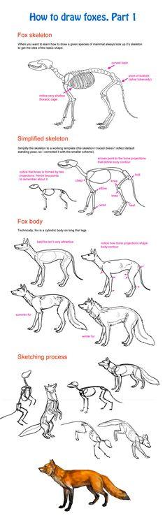 How to draw fox, part 1 by Elruu.deviantart.com on @deviantART