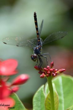 """dragonfly """"stuck up"""" LOL, ☮╰დ╮╭დ╯☮ ❥ Peace & ❥ℒℴνℯ❥☮Laughter ☮"""