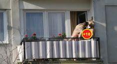 Çifti 'i çmendur': Serbi bënë seks të egër në ballkon (Pamjet +18)