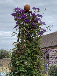 Abinger obelisk Runner Beans, Herbaceous Border, Obelisks, Garden Trellis, Arch, Explore, Rose, Flowers, Plants