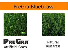 PreGra BlueGrass Artificial Grass Sold by the Linear oz. Faceweight Wide by Any Length you Need, in One Foot Increments Lawn Turf, Low Maintenance Garden Design, Plastic Grass, Fake Plants, Hearing Aids, Cabin Fever, Outdoor Landscaping, Herbs