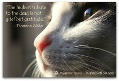 Creating a bridge to a pet in the afterlife http://healingpetloss.com/creating-a-bridge-to-a-pet-in-the-afterlife/ #petloss #healingpetloss