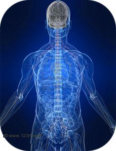 Transparent body showing the nervous system, electricity system throughout body creating the human electromagnetic field.