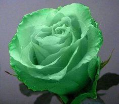 Цветы - КАРТИНКИ