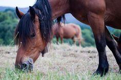 10 plantas tóxicas que debe evitar tu caballo