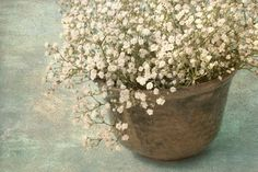 Baby's Breath  Photograph Flower Still Life White by JudyStalus, $17.00