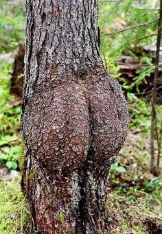 20 Bäume Die Man Zweimal Ansehen Muss Um Zu Verstehen Um Was Es Sich Handelt - Curioctopus.de