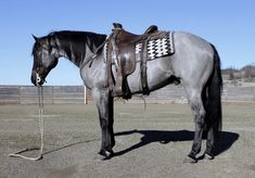 Horses for Sale Horses And Dogs, Cute Horses, Pretty Horses, Horse Love, Beautiful Horses, Wild Horses, Barrel Racing Horses, Barrel Horse, Quarter Horses For Sale