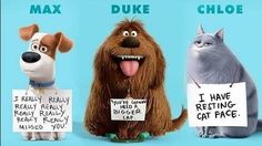secret life of pets - Google Search