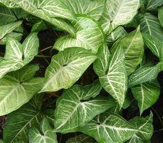 Plantas de interior Más