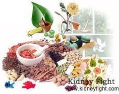 Herbal Medicine for People with Polycystic Kidney Disease(#PKD) Polycystic Kidney Disease(PKD) refers to a medical condition featured by numerous fluid-filled cysts in the kidneys. As a hereditary disease, there is no cure for this disease. Then what can patients do? Can herbal medicine be helpful? Please read on and you can find the answer. www.kidneyfight.com/polycystic-kidney-disease-treatment/379.html