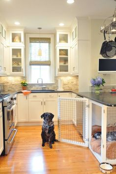 15 Photos that Are Probably on Your Pet's Pinterest Board   Apartment Therapy
