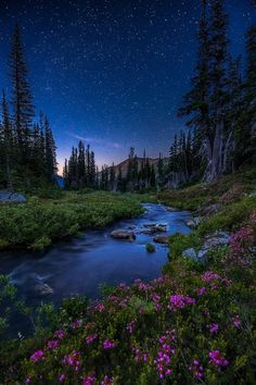 Twilight stars coming out in Olympic National Park, Washington --- by David Hodge