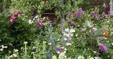 Ihanat perennat sopivat kaikkialle puutarhaan. Oikea kasvupaikka saa perennat kukoistamaan keväästä syksyyn. Lue Viherpihan kattava tietopaketti perennoista.