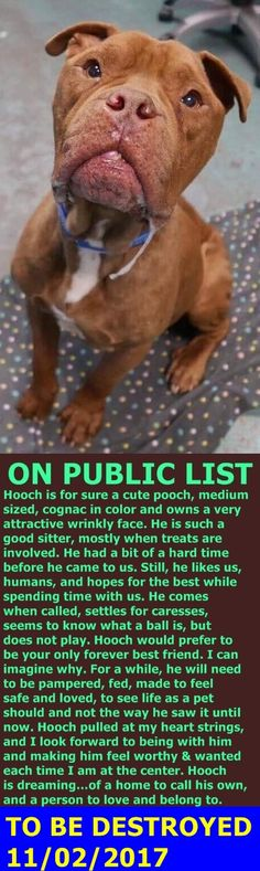 SAFE❤️❤️ 11/5/17 Hello, my name is Hooch. My animal id is #10599. I am a male brown dog at the Manhattan Animal Care Center. The shelter thinks I am about 4 years 1 weeks old. I came into the shelter as a stray on 23-Oct-2017. http://nycdogs.urgentpodr.org/hooch-10599/