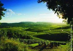 vignoble du Jura, Franche-Comté