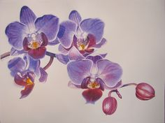 Purple Orchid 14 x 19 in watercolor on paper Artist : Yuwanunn Narasun Watercolor Orchid Tattoo, Orchid Drawing, Watercolor Artwork, Watercolor Flowers, Watercolour, Botanical Illustration, Botanical Art, Orchids Painting, Watercolor Projects