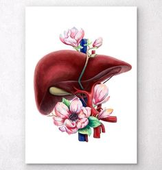 Beautiful antique looking funky art print showing anatomy of human liver. Perfect gift for doctors, medical students. Male Figure Drawing, Figure Drawing Reference, Guy Drawing, Drawing People, Anatomy Reference, Drawing Tips, Drawing Ideas, Human Anatomy Art, Anatomy Drawing