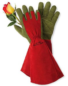Rose gardening gloves -- great thorn protection!#roses #gardening