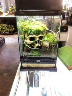 amazing NANO tank scull! found at Exotic Aquatic MELBOURNE