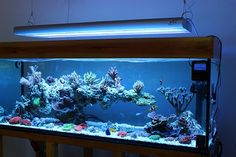 Aquascaping, Show your Skills. - Page 33 - Reef Central Online Community Reef Aquascaping, Aquarium Aquascape, Diy Aquarium, Aquarium Design, Aquarium Fish Tank, Coral Reef Aquarium, Marine Aquarium, Saltwater Fish Tanks, Saltwater Aquarium