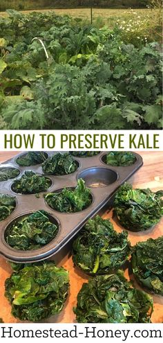 Got an abundance of kale in the garden? Kale is such a versatile vegetable and can be preserved in a variety of delicious ways. Learn how to preserve kale by freezing, dehydrating, fermenting, canning, and more! Freezing Vegetables, Fruits And Veggies, Sauerkraut Recipes, Cooked Kale Recipes, Veggie Recipes, Healthy Recipes, Kale Powder, Gardens, Amigurumi