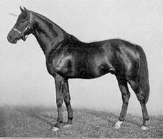 Son-In-Law(1911)(Colt)Dark Ronald- Mother In Law By Matchmaker. 4x4 To Blair Athol, 4x5 To Galopin, 5x5 To Newminster. 18 Starts 8 Wins 1 Second 1 Third. Won Goodwood Cup(Eng), Jockey Club Cup(Eng) Twice, Cesarewitch H. Leading Sire In England & Ireland In 1924 & 1930.
