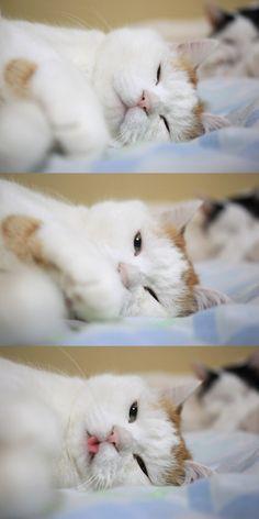 かご猫Blog 2017.11.02 べ