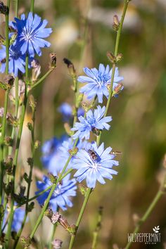 Flower Art Images, Flora Und Fauna, Dress Images, Flower Wallpaper, Flower Tattoos, Tattoo Images, Flower Girl Dresses, Bunt, Flowers