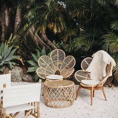 Tropical backyard #12thtribevibes #shop12thtribe