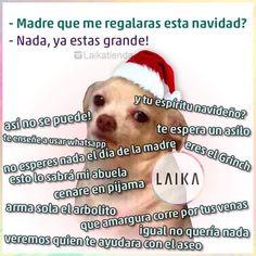 Que me vas a regalar esta Navidad? #memes #perrito #navidad