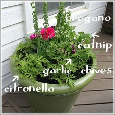 Potted Mosquito Repellant ~ The main anti-mosquito part of the planter is Scented Geranium, because they smell just like a Citronella candle. Also in the planter are garlic chives, spicy oregano, regular geraniums (just for pretty) & catnip.