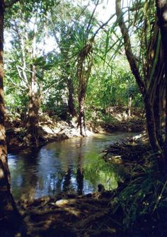 Marine Environments Waterways (Tranquility rapid creek image by audrey tate)