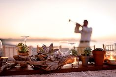 succulents & driftwood table decor Best Wedding Photography - Puerto Vallarta