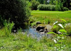 A small stream running through the course.  Gardnerville, NV. Photo by Kirsten Giving.
