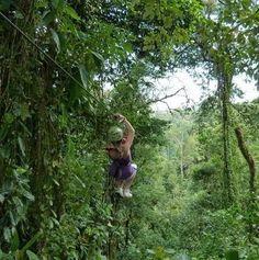 zip lining through the jungle!