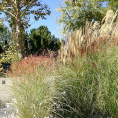 Gradina moderna cu plante decorative tot timpul anului. Design naturalist, ușor de întreținut cu aspect liber non formal. Texturi și mișcare, ierburile decorative sunt graminee ce pot atinge înălțimi de 2-3 metri, în general speciile decorative ca cele din imagine ajung la 1.5 - 2 metri. Creștere rapida, schimbări dramatice în estetica gradinii pe parcursul anului. Thing 1, Landscape Design, Studio, Modern, Plants, Trendy Tree, Landscape Designs, Studios, Plant