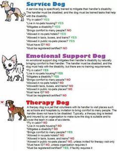 Useful Dog Obedience Training Tips – Dog Training Service Dog Training, Service Dogs, Dog Training Tips, Therapy Dog Training, Psychiatric Service Dog, Emotional Support Animal, Emotional Support Dog Training, Dog Anxiety, Tree Of Life