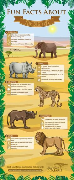 These fun facts about the Big Five – Cape Buffalo, Elephant, Leopard, Lion and Rhinoceros (Black & White – are an excellent way to spark your children's interest in some of the animals they're likely to see on an African safari. Animal Facts For Kids, Fun Facts For Kids, Fun Facts About Animals, Animals For Kids, African Animals Facts, Safari Crafts, Giraffe Crafts, Preschool Jungle, Africa Craft