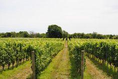 Wine Tasting North Fork Long Island- Vineyards