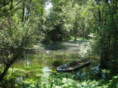 nei pressi della foce del Chiese  #Mantova #Mantua #Italia #Italy #natura #nature #fiume #river