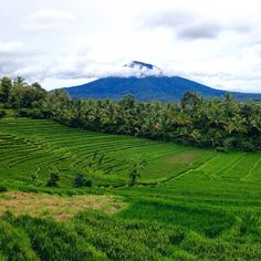💕💕#addicted #to #mountains #northbali #adventure #everythingisgreen #ricefield #landscape #nature_perfection #naturephotography #bali…