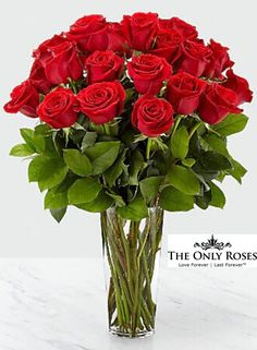 One Dozen 12 Long Stem Red Preserved Roses Luxury Bouquet In Glass Vase Rose Delivery, Flower Delivery, Red Flowers, Beautiful Flowers, Flowers Nature, Flower Coupons, Roses Luxury, Ecuadorian Roses, 12 Roses