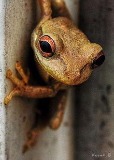 Froggy by Kenneth B, via Flickr