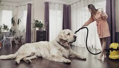Find the best vacuum for pet hair removal for your house to remove the furs of the pets from the floor. There are many brushes works by sucking the pet hair and clean the floor of the house. But the latest electric vacuum works in an amazing way. Best Pet Hair Vacuum, Best Vacuum, Non Shedding Dogs, What Cats Can Eat, Allergic To Dogs, Hypoallergenic Dog Breed, Excited Dog, Big Dog Breeds, Huge Dogs
