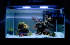 Tips and Tricks on Creating Amazing Aquascapes - Reef Central Online Community Coral Reef Aquarium, Home Aquarium, Aquarium Design, Marine Aquarium, Aquarium Ideas, Saltwater Tank, Saltwater Aquarium, Aquarium Fish, Nano Reef Tank