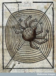 A spider on its web.  Coloured Woodcut 1491  From: Ortus sanitatis  By: Arnaldus de Villanova