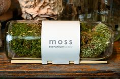 make your own moss or sedum terrarium with these kits made from recycled wine bottles